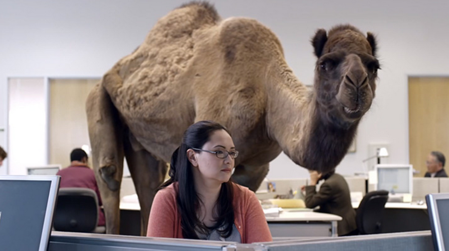 Woman at desk counting calories with camel